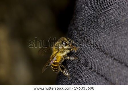 Yellow and black bee on black fabric - stock photo