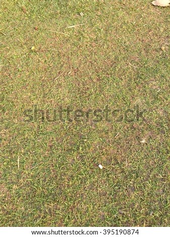 yellow and green grass field - stock photo