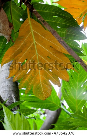 Yellow and green leaves for background