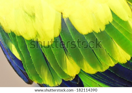 Yellow and green parrot bird feathers in close up - stock photo