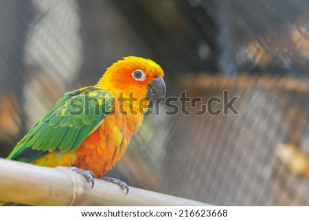 Yellow and green Parrot head close-up
