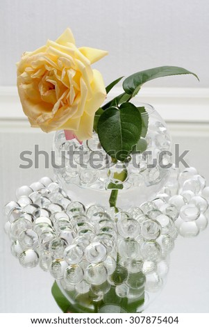 Yellow and lush rose in a vase with hydrogel - stock photo