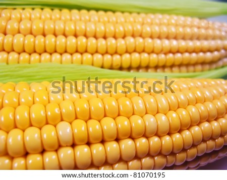 Yellow and neat corn cobs close up - stock photo