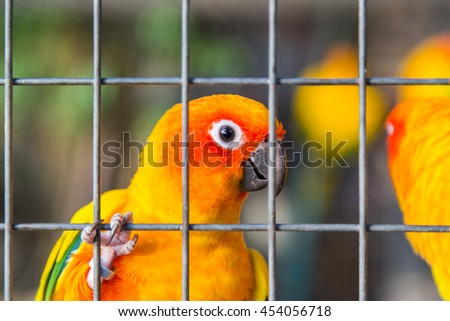 Yellow and orange parrot in a cage at public park - stock photo