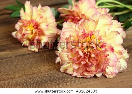 Yellow and orange tree peony on wooden background, lat. Paeonia suffruticosa, also known as  Mountain tree  or Chinese tree peony.