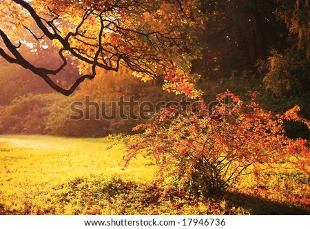 Yellow and pink autumn background
