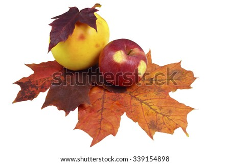 Yellow and red apple on the autumn leaves, isolated on a white background. - stock photo