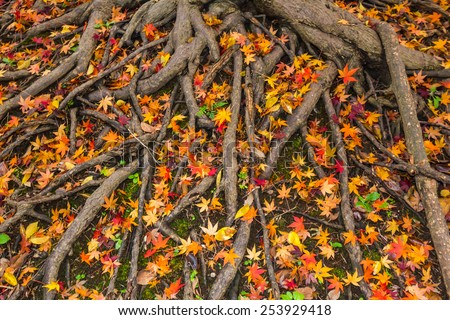 Yellow and red color leaves fallen on ground in Autumn - stock photo