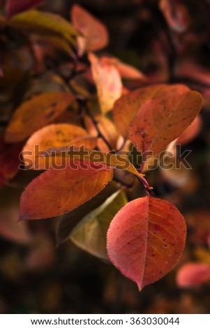 yellow and red leaves on a dark background
