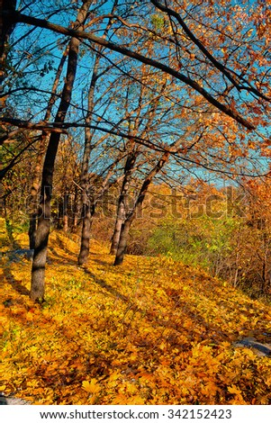 Yellow autumn forest on a sunny day