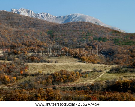 yellow autumn forest on the background of rocks  - stock photo