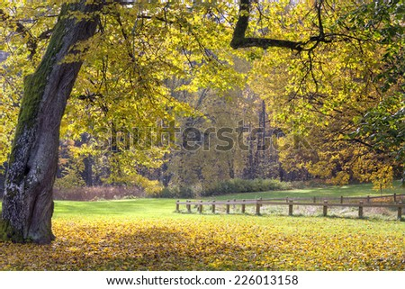Yellow autumn landscape in a park