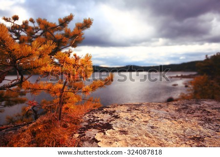 Yellow autumn landscape in the mountains - stock photo
