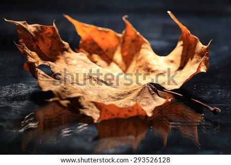 yellow autumn leaves background fall - stock photo