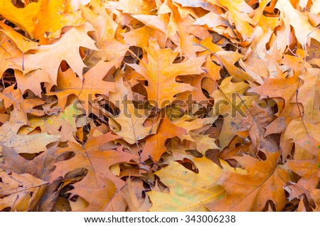 Yellow autumn leaves on the ground background - stock photo
