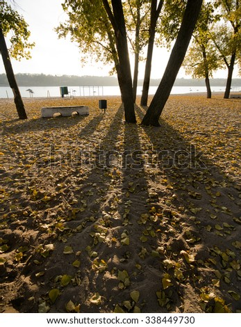 yellow autumn leaves on the ground lit by the sun and the dark tree trunks - stock photo
