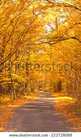 Yellow autumn road in the forest.