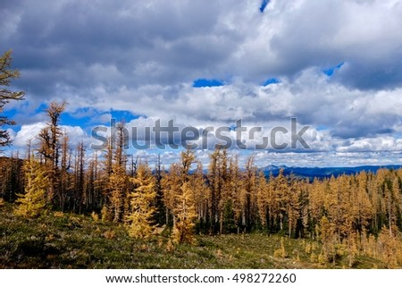 Yellow autumn trees and blue sky with clouds. Frosty Mountain. Hope. Manning Provincial Park. British Columbia. Canada.