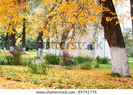 Yellow autumn trees in a park