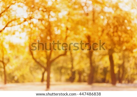 Yellow autumn trees out of focus. Abstract bokeh backdrop. Natural blurred background of fall park or garden. - stock photo