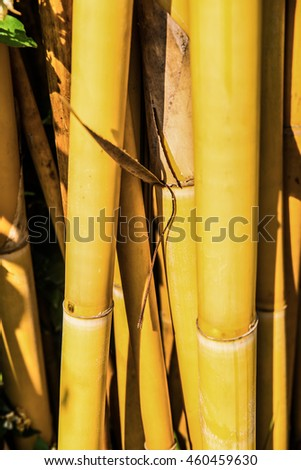 Yellow bamboo background, Thailand