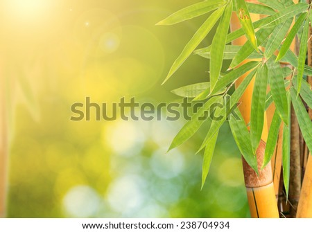 Yellow Bamboo Forest with light beam - stock photo