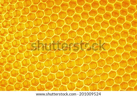 yellow beautiful honeycomb with honey - stock photo