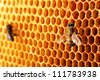yellow beautiful honeycomb with honey and bee, background - stock photo