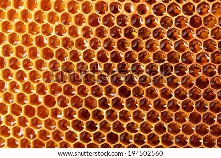 yellow beautiful honeycomb with honey, background - stock photo