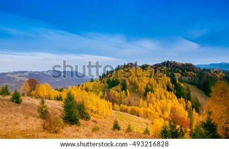 Yellow Beautiful Trees in the mountains.