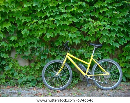Yellow bicycle standing next to a wall covered with creepers