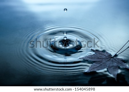 Yellow birch leaves on water surface - stock photo