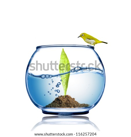 Yellow bird on the fish bowl with plant growing inside - stock photo