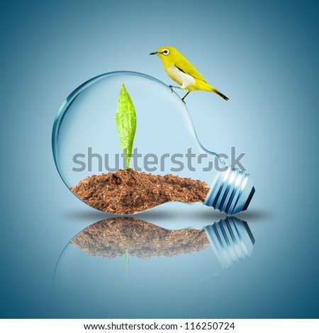 Yellow Bird on top of Light Bulb with soil and green leaf inside