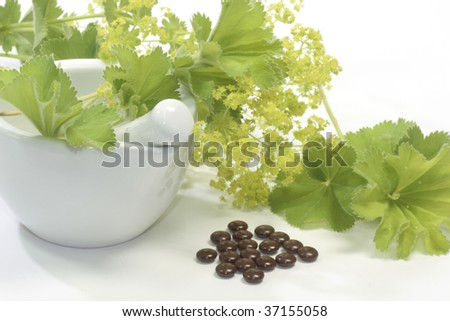 Yellow blooming ladys mantle with pills and mortar - stock photo