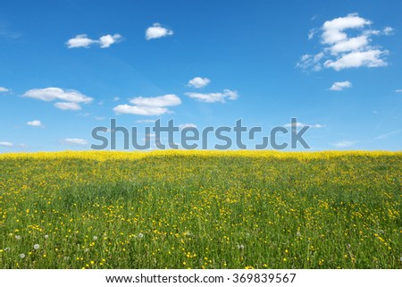 Yellow blooming, wild spring meadow with behind rape field and a blue and white sky
