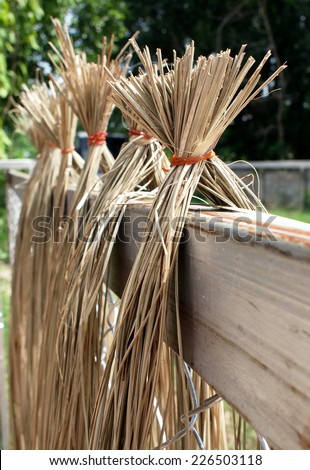 yellow brown sun dried fiber fibre of sedge, papyrus, natural fiber growing in natural wetland processed for use as raw materials for weaving traditional hand craft work product in THAILAND and asian - stock photo