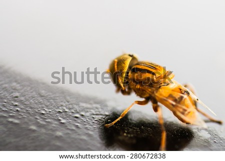 yellow bug walking on the floor - stock photo