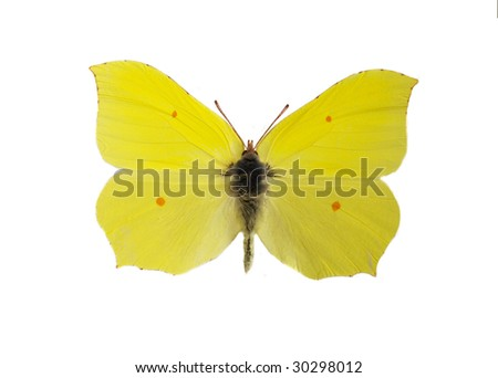Yellow butterfly - stock photo