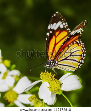 Yellow butterfly fly in morning nature. - stock photo