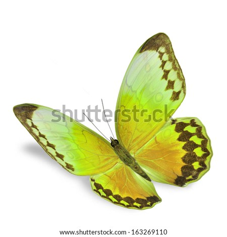 Yellow Butterfly flying, isolated on white background - stock photo
