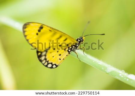 Yellow butterfly in green field - stock photo