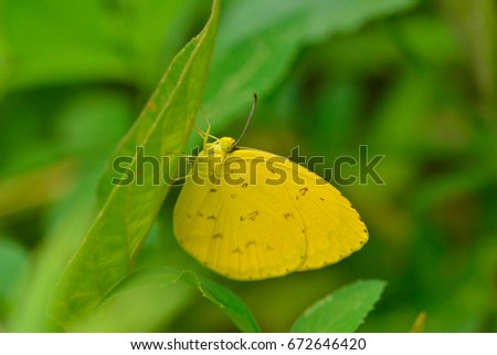 Yellow butterfly on flower in nature