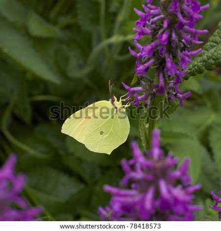 yellow butterfly on purple flower closeup - stock photo