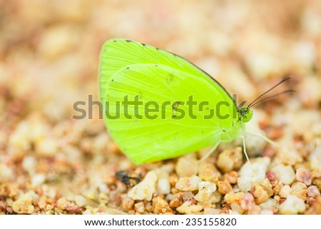 Yellow  butterfly on sand beach   - stock photo