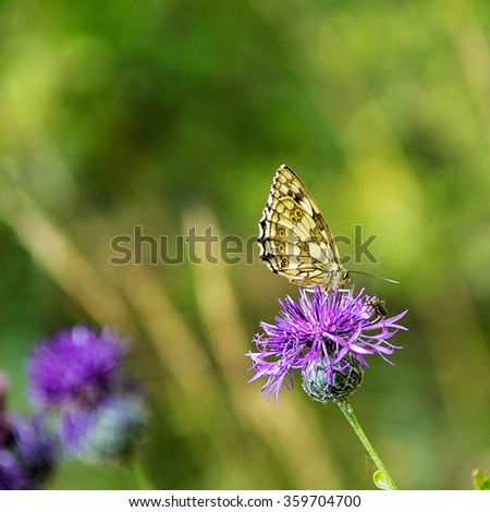 Yellow butterfly resting on a violet flower