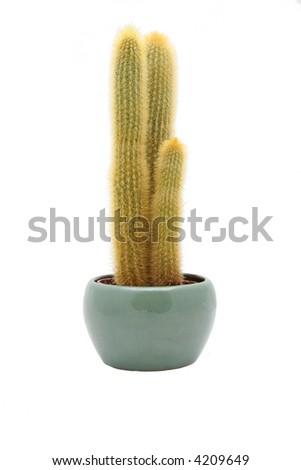 yellow cactus in ceramic bowl - stock photo