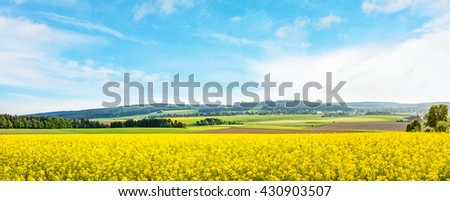yellow canola field panorama with forest / trees and rural landscape in the background