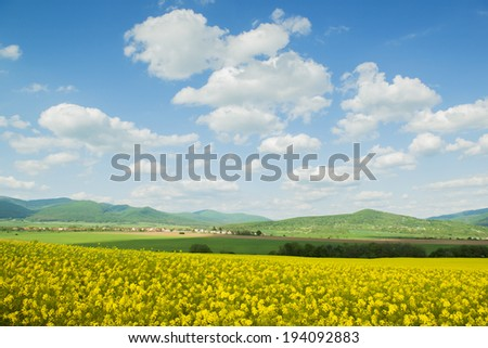 Yellow canola field under blue cloudy sky