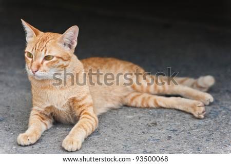 Yellow cat - stock photo